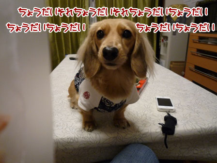 008_20111215233150.jpg