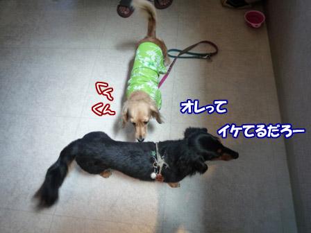006_20120716231234.jpg