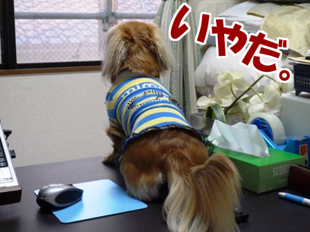 013_20111121231309.jpg