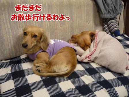 009_20110103222443.jpg