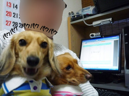028_20111121231308.jpg