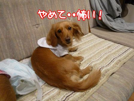 009_20110125224950.jpg