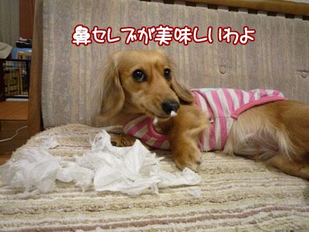 020_20110210011330.jpg