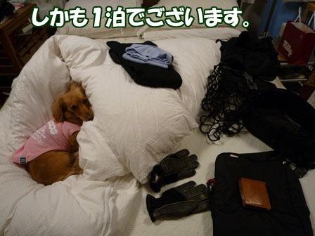 009_20101203233112.jpg