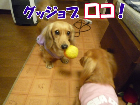 030_20110104230558.jpg