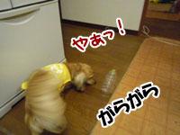 019_20111203224943.jpg
