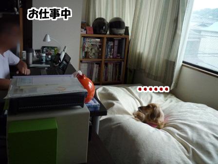 002_20110528004147.jpg