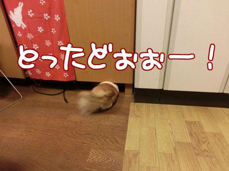 011_20130326234854.jpg