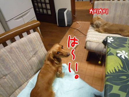 010_20110127230403.jpg