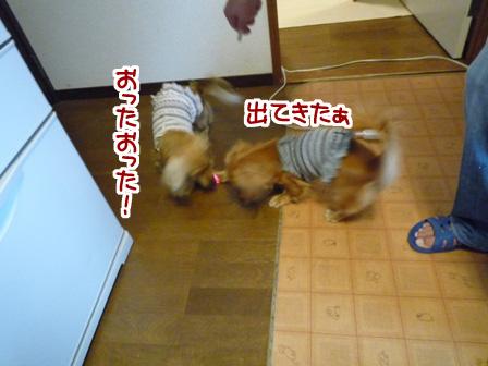 041_20110529234721.jpg