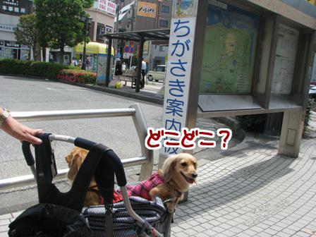 006_20110521232724.jpg