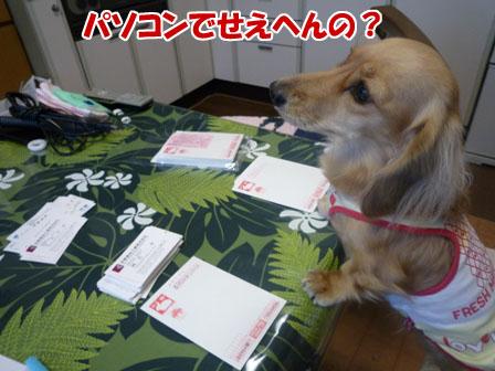 001_20101213213549.jpg