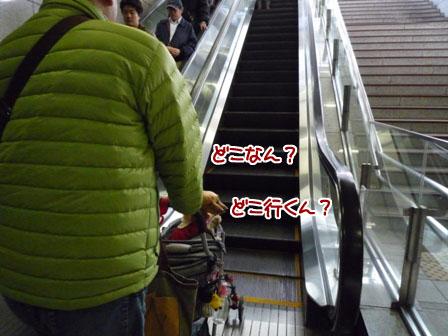001_20111204235703.jpg