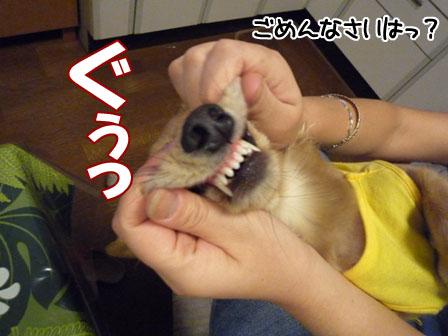 007_20111005231945.jpg