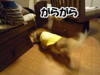 013_20111203224944.jpg