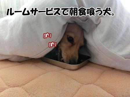 001_20130125223950.jpg