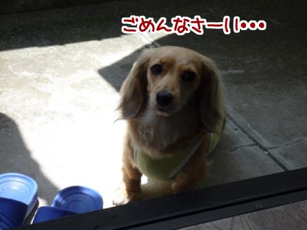 009_20110605215822.jpg
