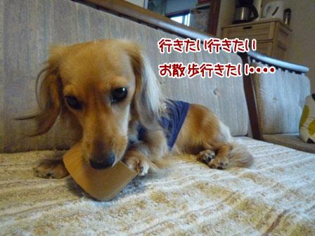007_20110803150952.jpg