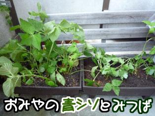 003_20110623235801.jpg