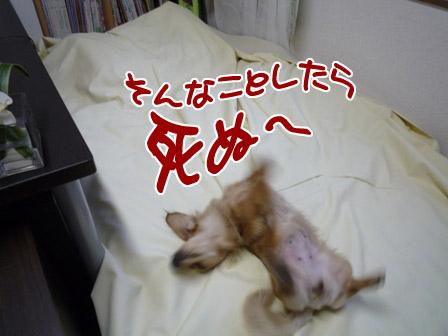 009_20120530231720.jpg