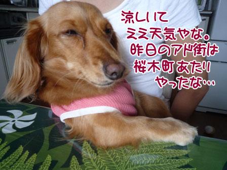 003_20110926224245.jpg