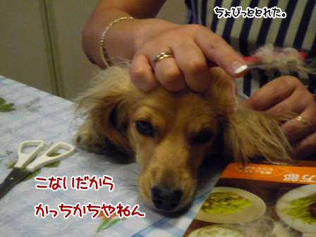 008_20120719001726.jpg