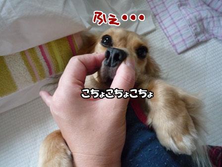019_20110731225544.jpg