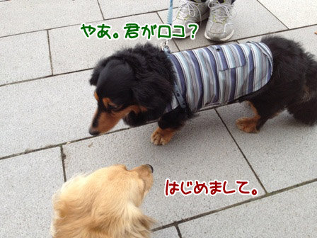 IMG_0873.jpg