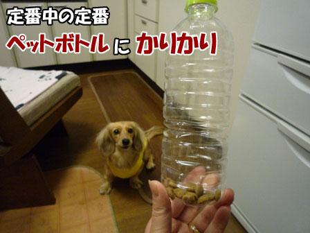 010_20111203224943.jpg