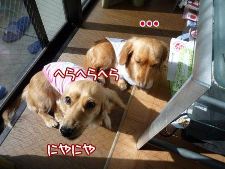 011_20110211003810.jpg