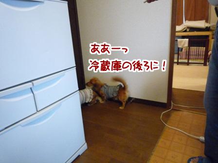 040_20110529233448.jpg