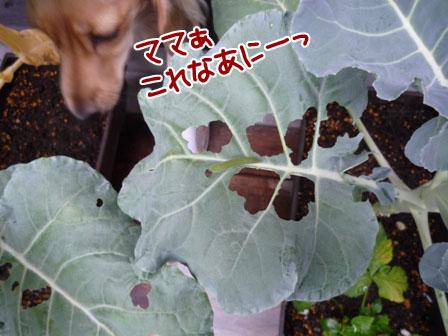 039_20111209223630.jpg