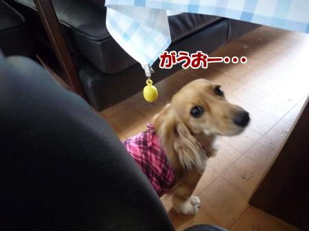 002_20120727235613.jpg