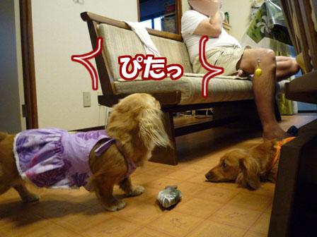 024_20110722230322.jpg