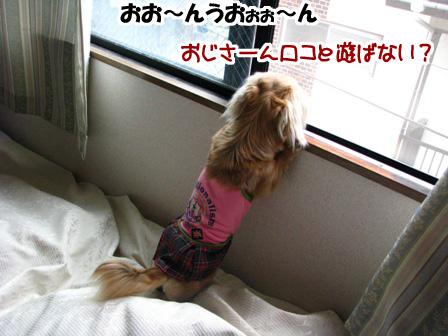023_20110523225044.jpg