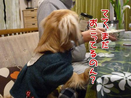 011_20110110215225.jpg