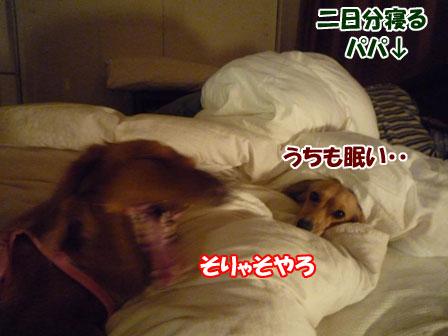 002_20101201220408.jpg