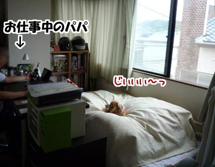 001_20110528004147.jpg