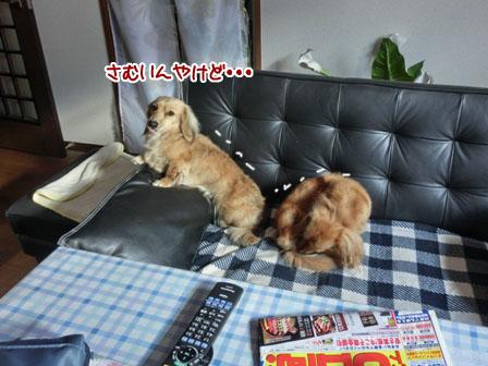 011_20121229230243.jpg