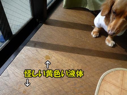 004_20110211003812.jpg