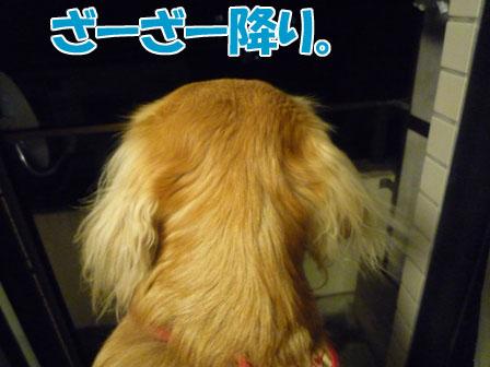009_20101213213548.jpg