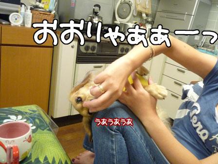 006_20111005231946.jpg