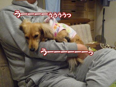 015_20101230223725.jpg