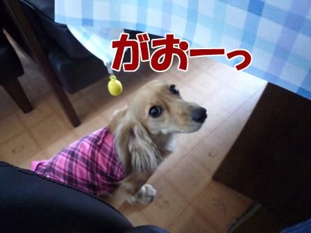 003_20120727235614.jpg