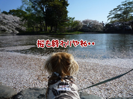 053_20110414223820.jpg