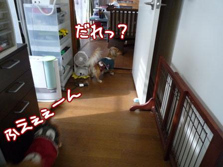 010_20111208214403.jpg
