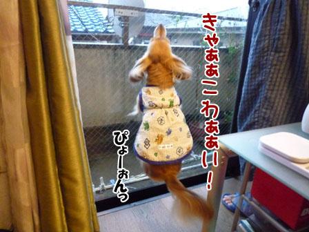 045_20110922001812.jpg