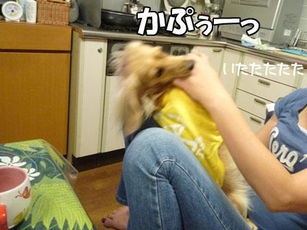 005_20111005231946.jpg