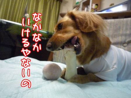 054_20110126224415.jpg