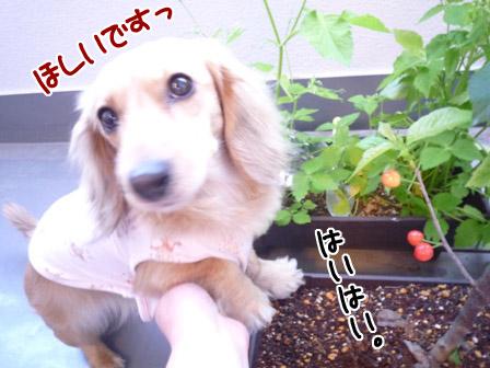 035_20120605231247.jpg